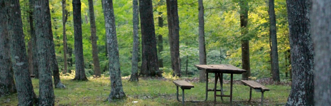 Picnic table in the woods.