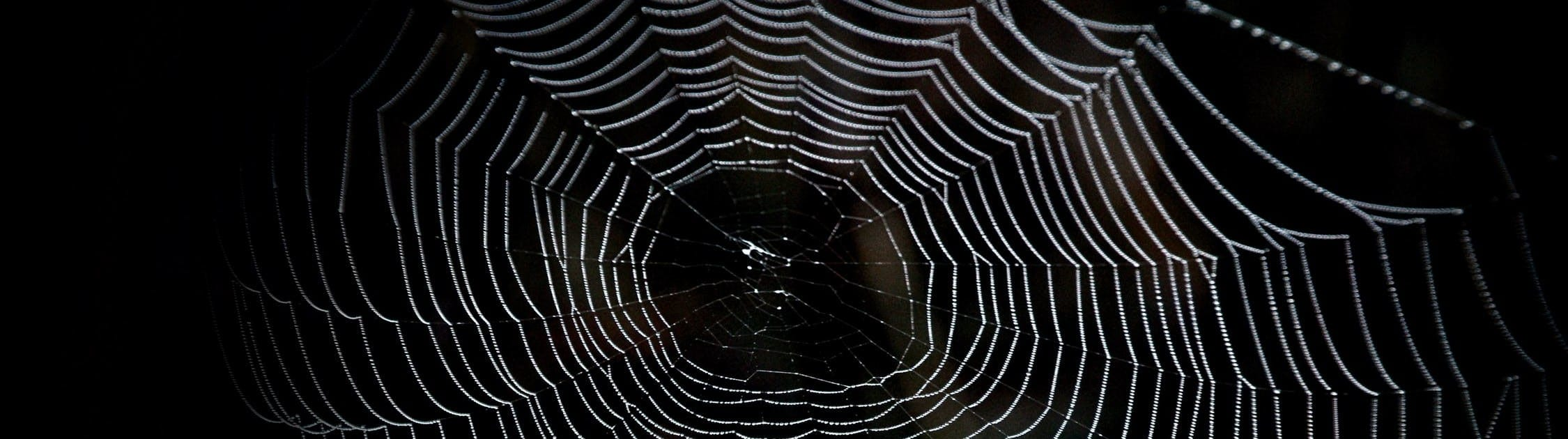Spider web against black background.