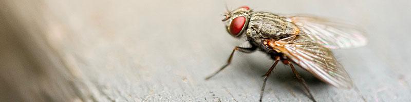 Fly Control - Wil-Kil Pest Control