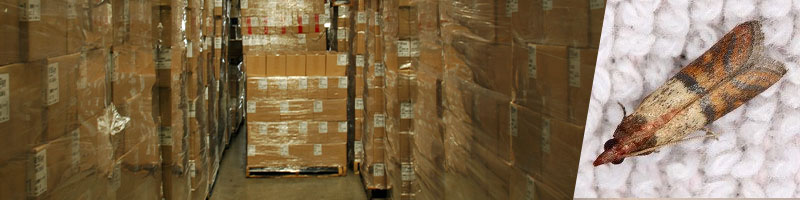 Cardboard boxes and stored product pests