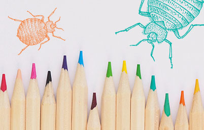 Colored pencils and drawings of bed bugs