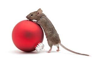 Mouse climbing on top of ornament