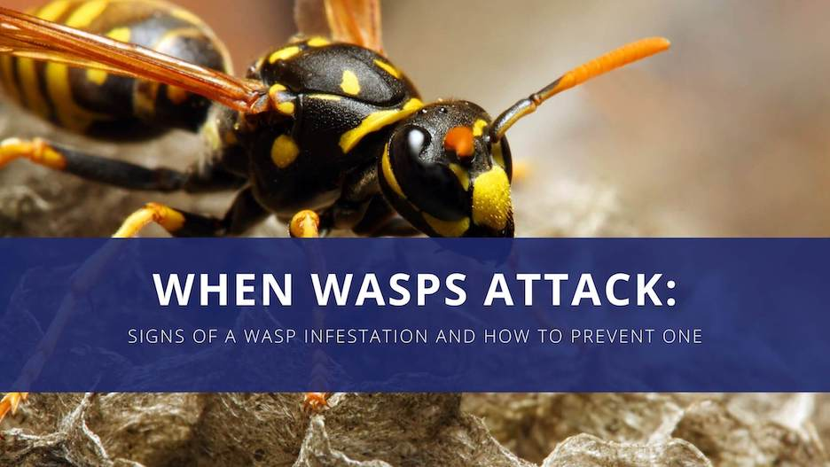 Close-up perspective of a yellow jacket accompanied by the text reading when wasps attack